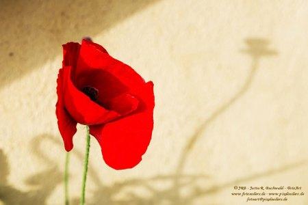 Florales - Mohn