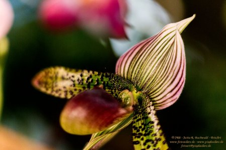 Florales - Orchideen