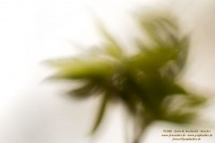 Haiku-Fotografie
