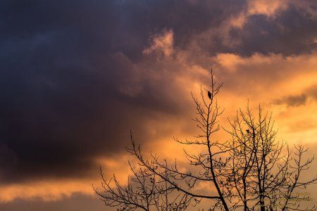 Himmlisches Wolkenlicht mit Vogelgezwitscher