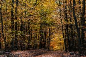 Waldimpresionen